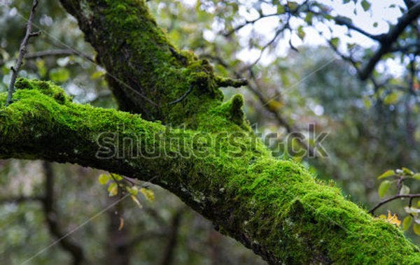 tree-moss-texture