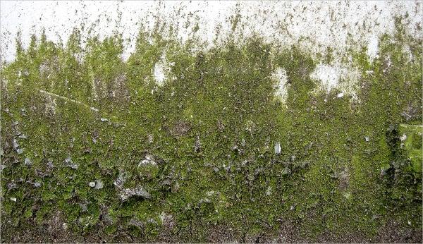 9 Moss Textures Free Psd Ai Vector Eps Format