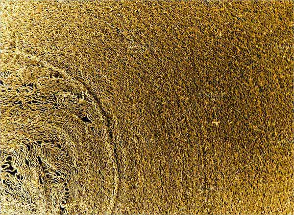 bronze macro texture