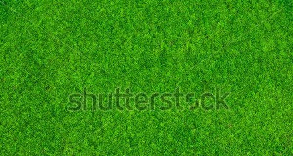 grass-with-moss-texture