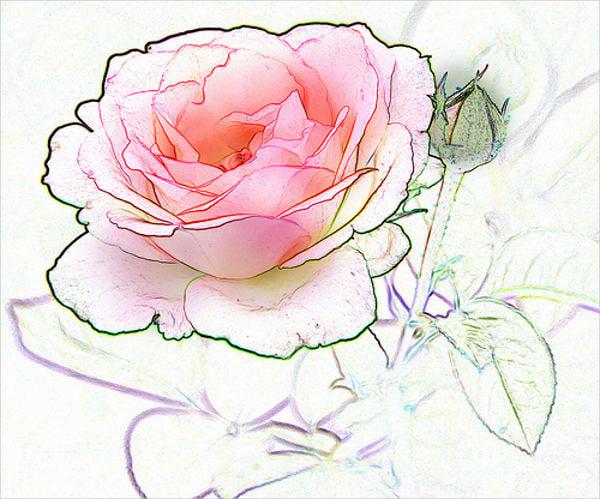 rose-flower-sketch