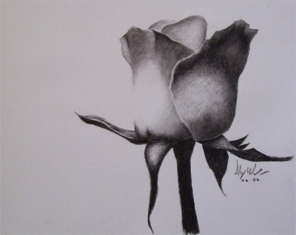 black and white flower sketch