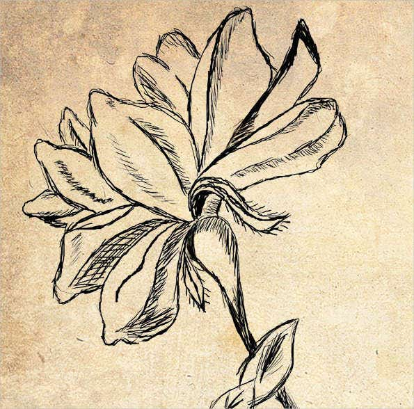vintage flower sketch