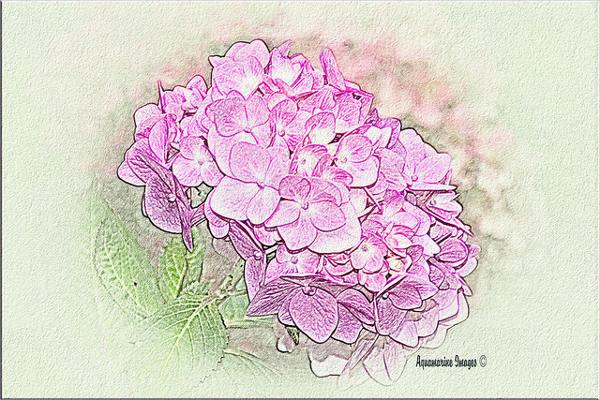 pencil-flower-sketch