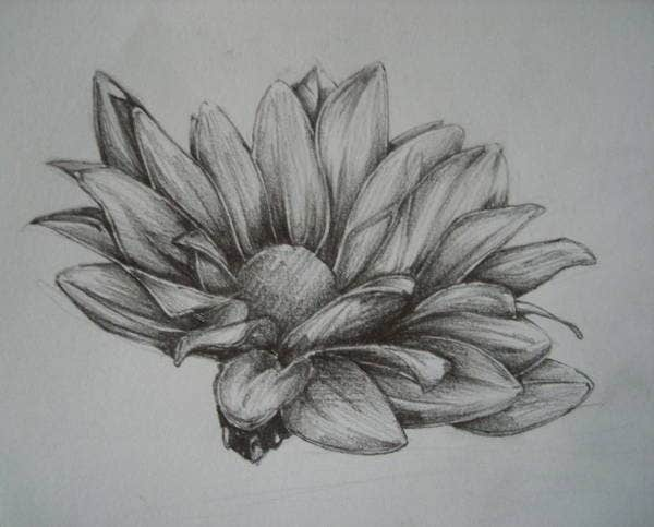flower-pencil-sketch