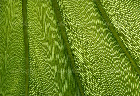 green-leaf-texture