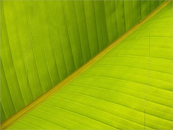 banana-leaf-texture