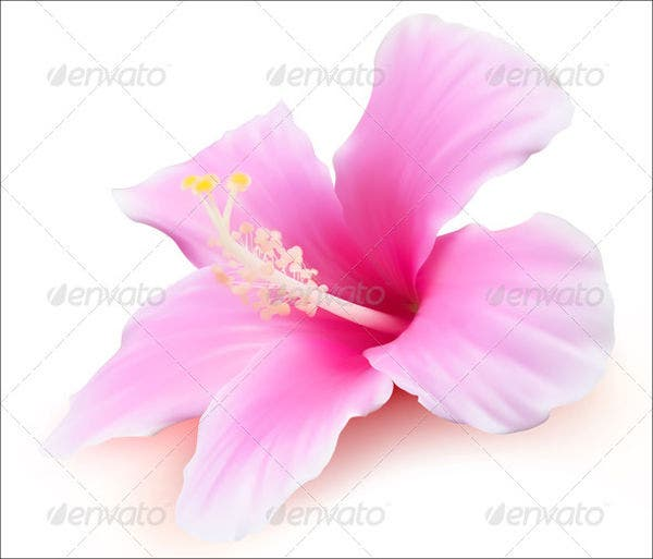 tropical-flower-vector