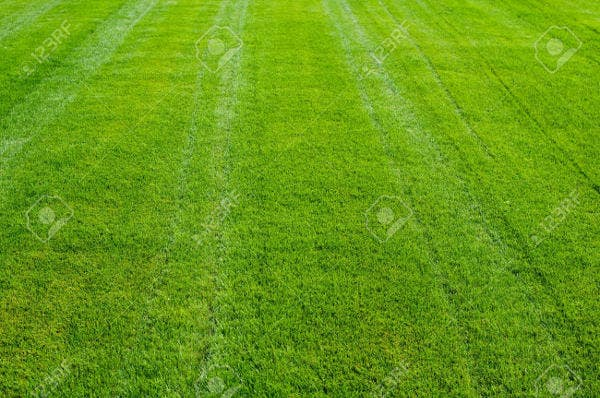 striped-lawn-texture