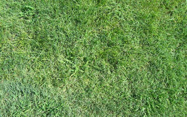 lawn texture for photoshop