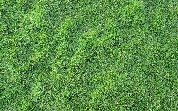 long-flattened-lawn-texture
