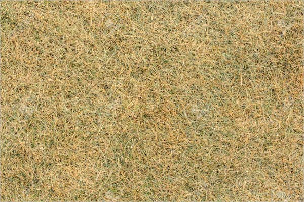 dry-lawn-texture