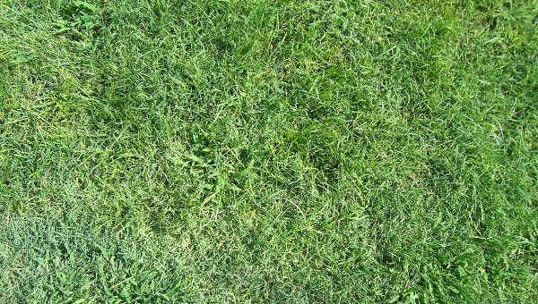 lawn texture1