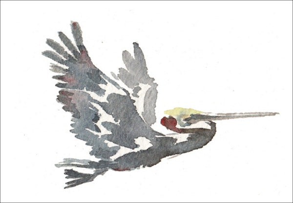 watercolor-bird-sketch