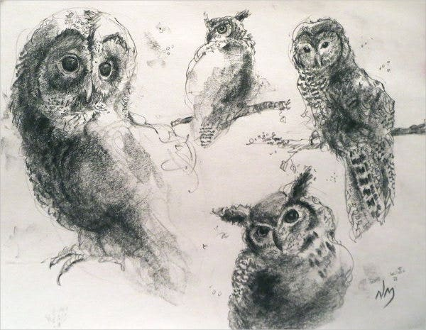 bird charcoal sketch