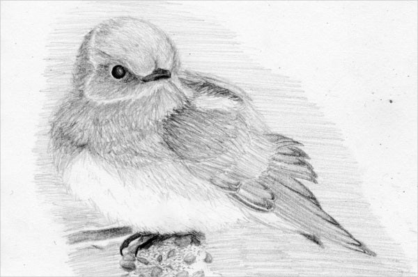 bird-pencil-sketch
