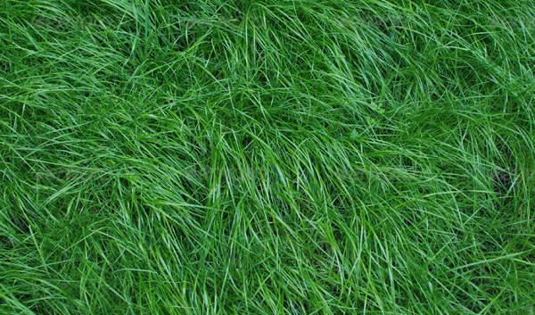lawn-grass-texture