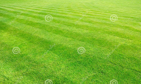 perspective-lawn-texture