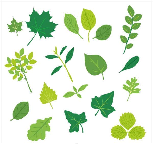 leaf sketch vector