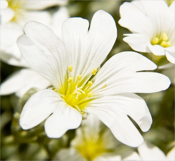 white-daisy-flower-with-stem-template