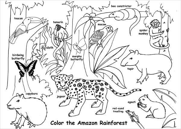 Jungle Habitat Coloring Page