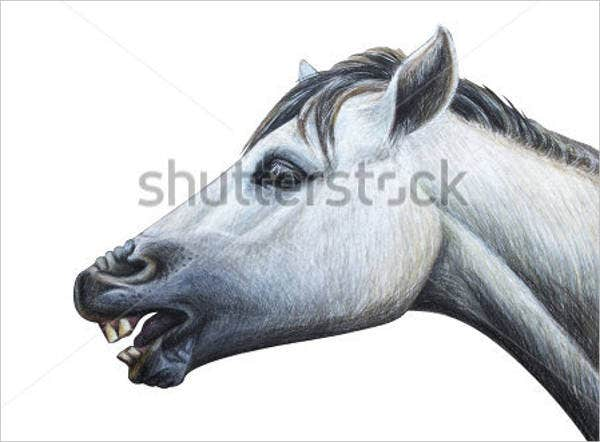 horse-head-drawing
