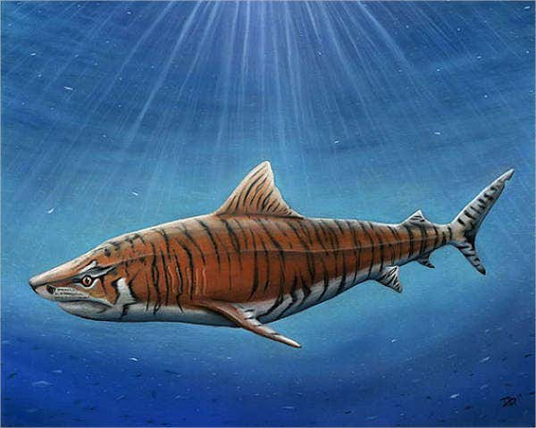 tiger-shark-drawing