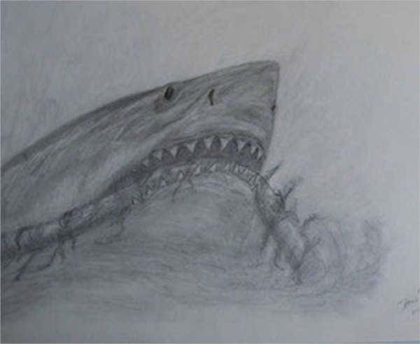 shark-head-drawing