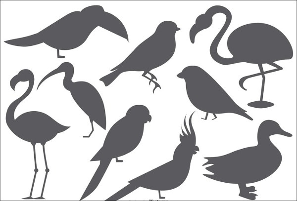 vector-bird-shape-template