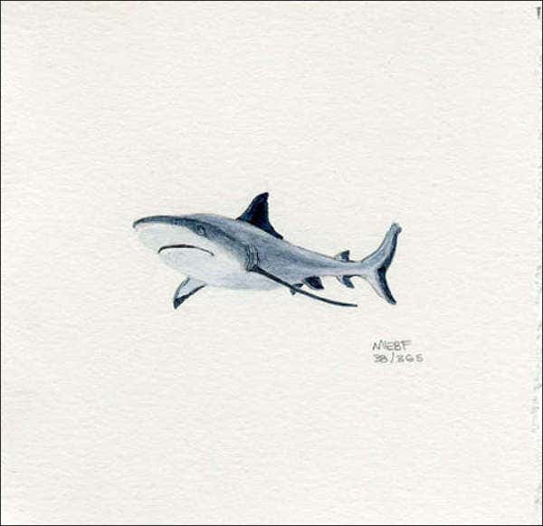 realistic-shark-drawing