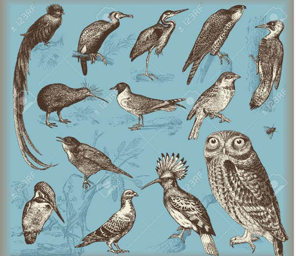 Vintage Bird Illustration