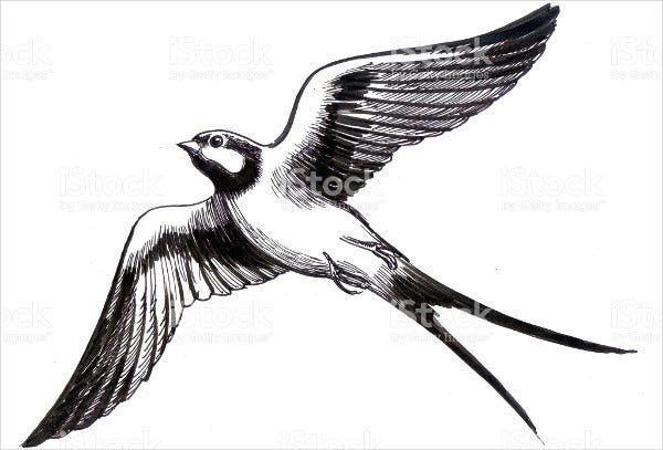 Bird Flying Illustration