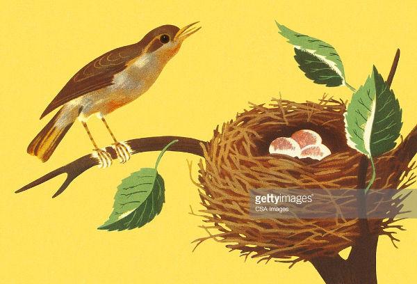 Bird Nest Illustration