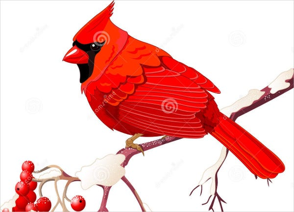 Cardinal Bird Illustration