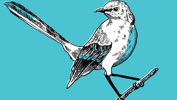 birdillustrations