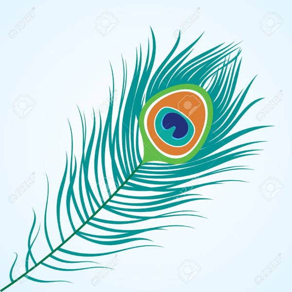 peacock-feather-illustration
