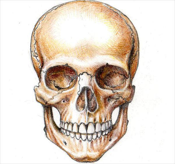 9  skull illustrations
