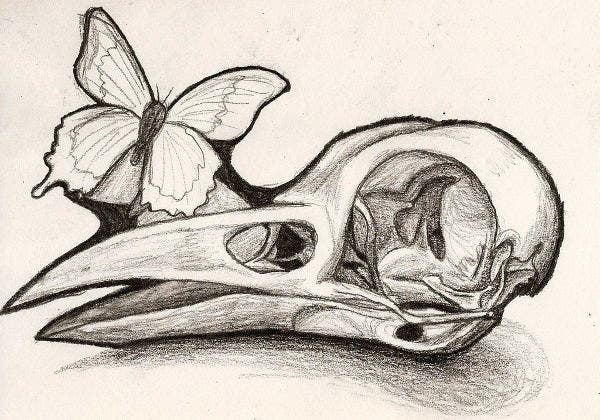 Bird Skull Illustration