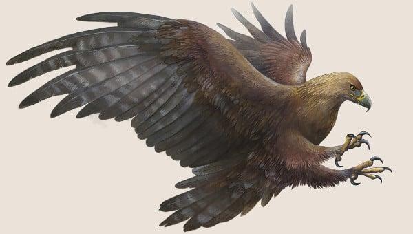 eagle illustrations