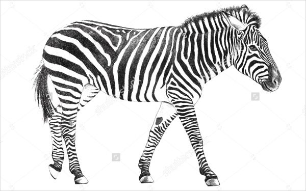 zebra-animal-pattern