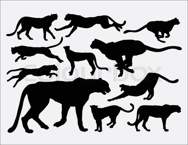 wild-animal-icon