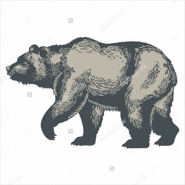 Bear Illustration vector