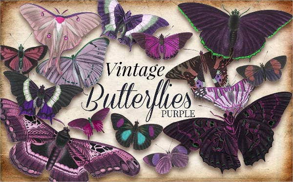 Vintage Butterfly Illustration