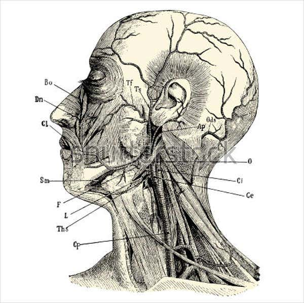 vintage-medical-illustration