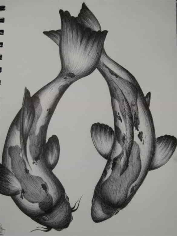 Love is not confined to human beings only this love drawing photo shows two cute koi fishes in pencil sketch you can use this image for both online and