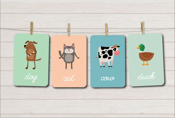 animal flash card