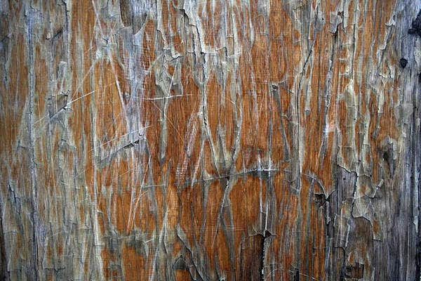 Grunge Cracked Wood Texture