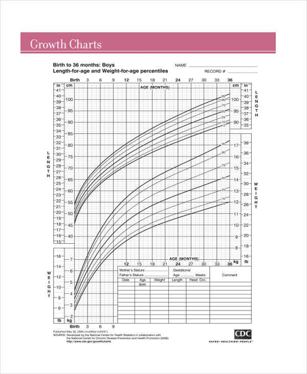 Baby Chart Templates  Free Sample Example Format Download