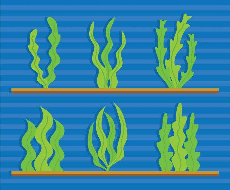 seaweed-vector