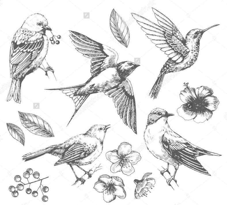 sh stock vector set of of birds and flowers line drawings ink drawing hand drawn illustration vector 412369294 788x713